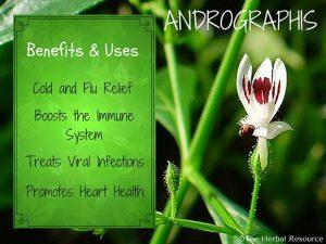 Pharma Care - Produtos Saúde - Andrographis Paniculata